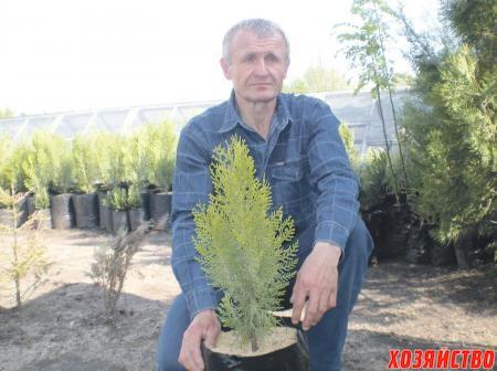 Николай осваивает новый метод выращивания «декоративки» в пакетах