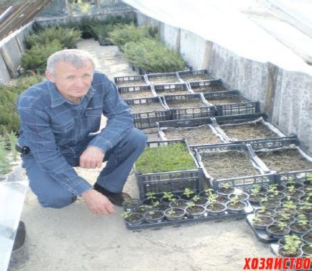 В малой теплице выращиваются сеянцы из семян
