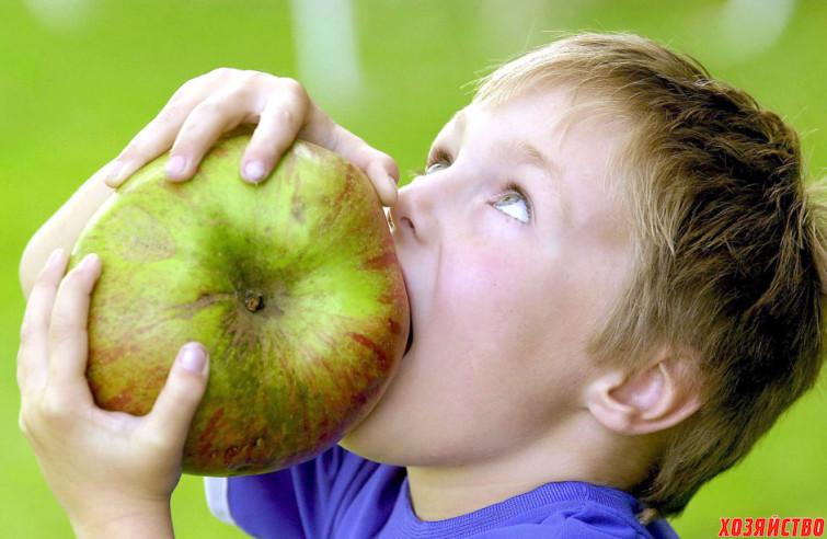 Яблоки-гиганты
