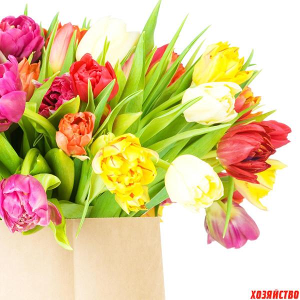 Новые сорта тюльпанов