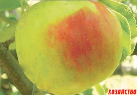 Семена Яблок для сада и огорода | 328x470