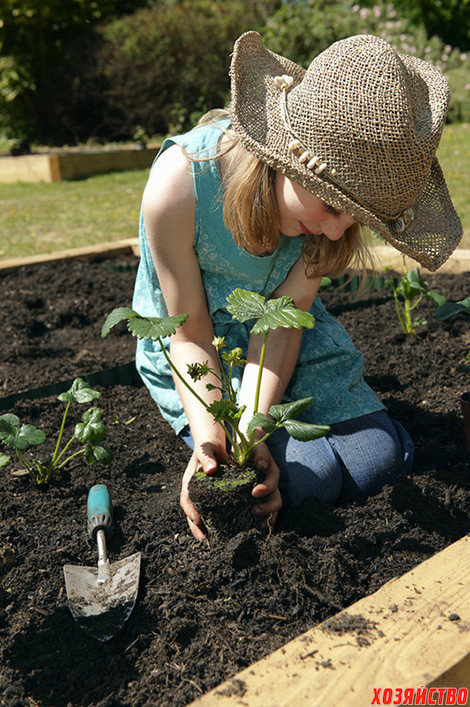 Как долго можно выращивать клубнику на одном месте?