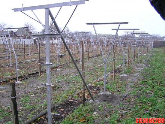 Складные шпалеры для винограда фото