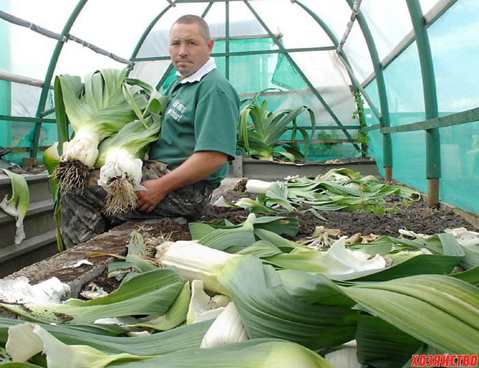Лук-порей: выращивание от посева до уборки 39