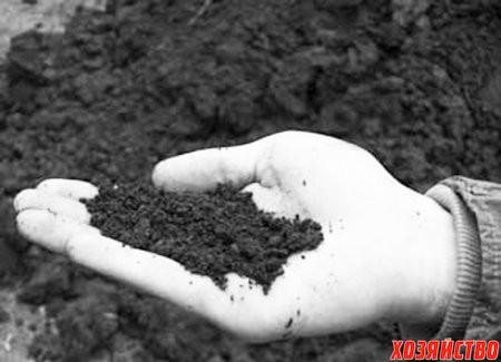 Сажать в песчаной почве 357