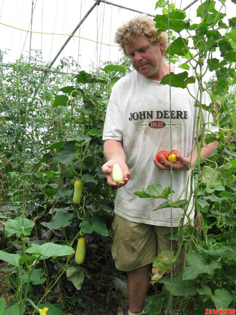 Выращивание огурцов в грунте в подмосковье 83