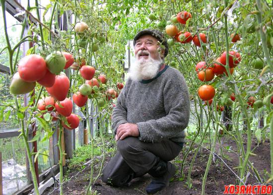 помидоры для рыбалки