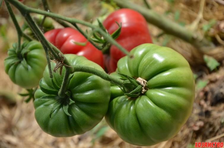 tomat-koroleva-rozovykh-tomatov.jpg