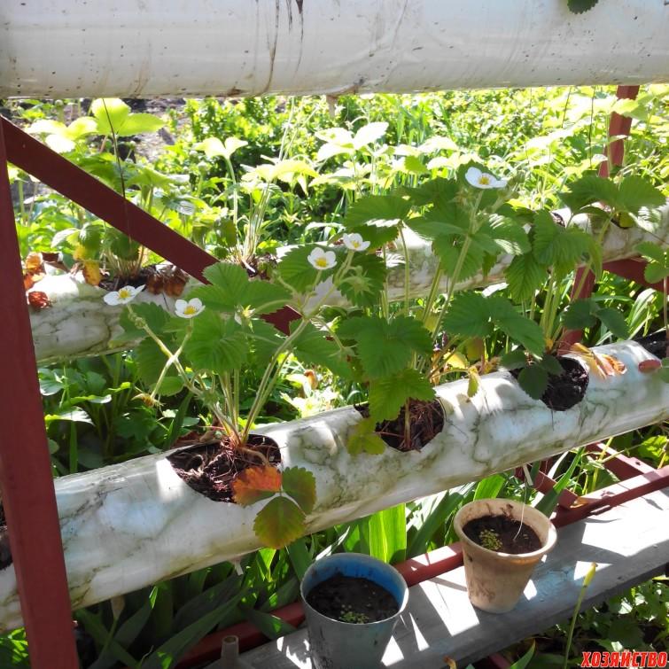 Вертикальное выращивание клубники в модулях 43