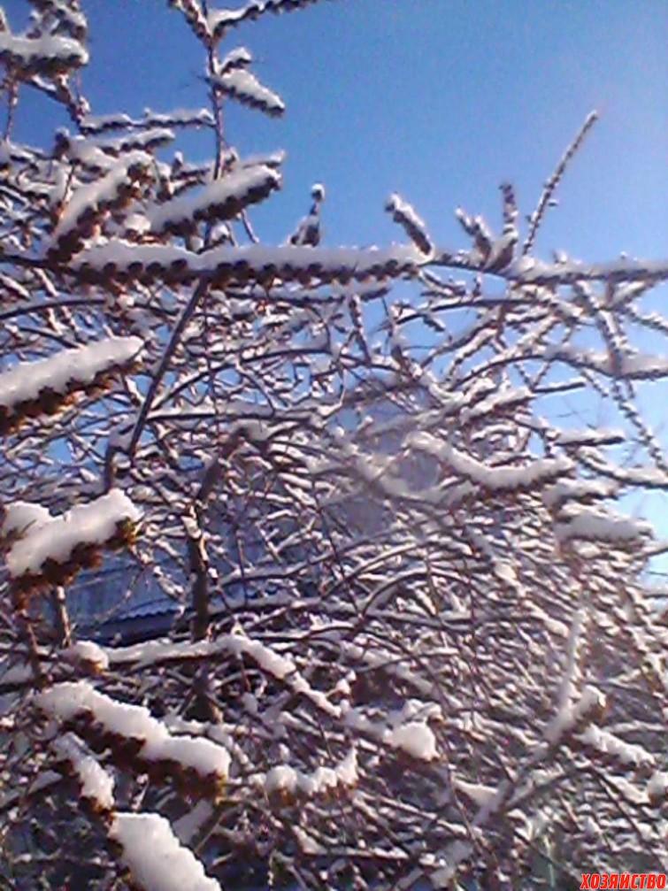 taganrog.-20-marta.-ledyanaya-glazur-na-derevyakh.-vot-takaya-beda-sluchilas-s-uzhe-raspusayushchimisya-pochkami1.jpg