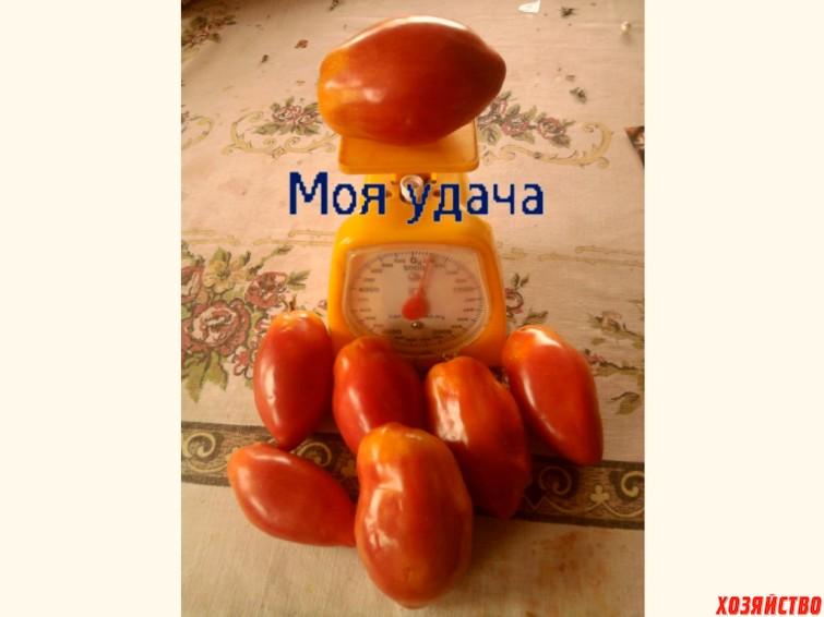 moya-udacha.jpg