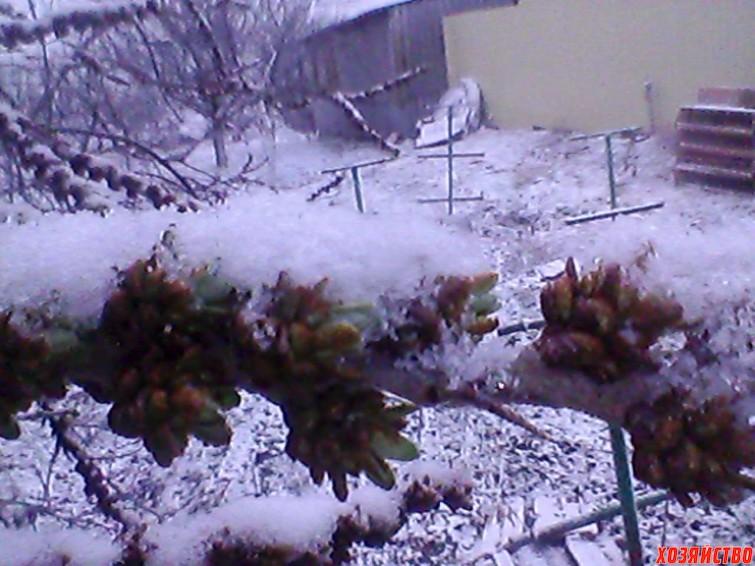 taganrog.-20-marta.-ledyanaya-glazur-na-derevyakh.-vot-takaya-beda-sluchilas-s-uzhe-raspusayushchimisya-pochkami.jpg