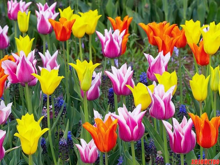 горшки под тюльпаны.jpg