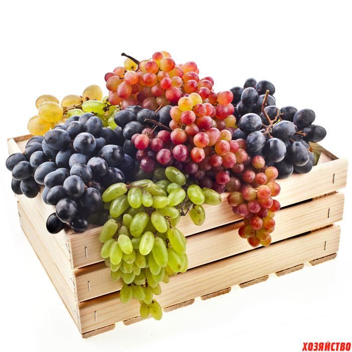 лежкий виноград.jpg