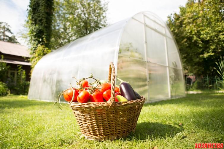Меры по спасению тепличных овощей   5.jpg