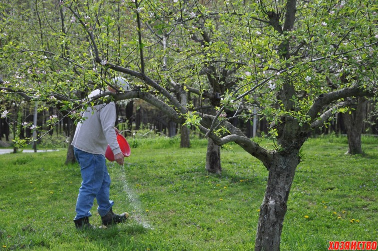 fertilizing fruit trees.jpg