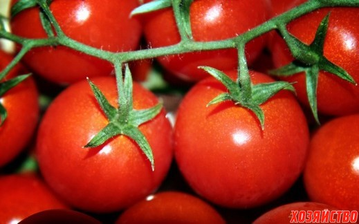 tomati.jpeg