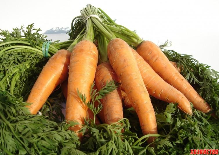 Морковь на хранение.jpg