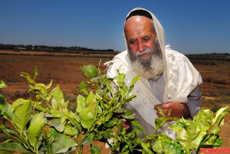 shmita-year-israel.jpg