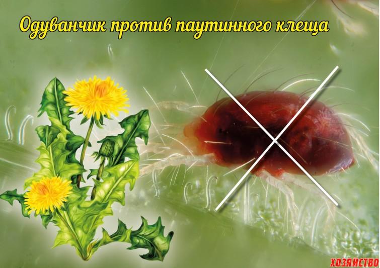 Средства против паутинного клеща.jpg