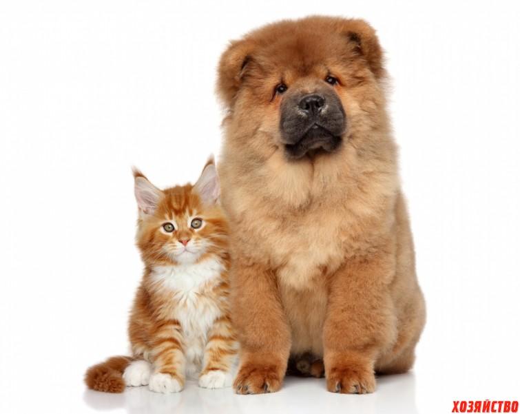 Собачья кото-мама.jpg