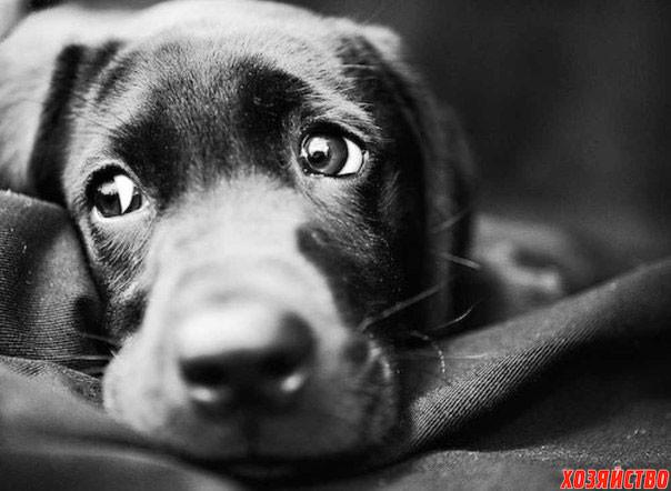 Рана на хвосте у собаки3.jpg