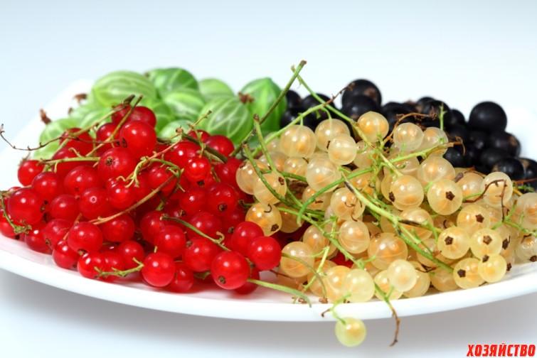 sweet_berries_02.jpg