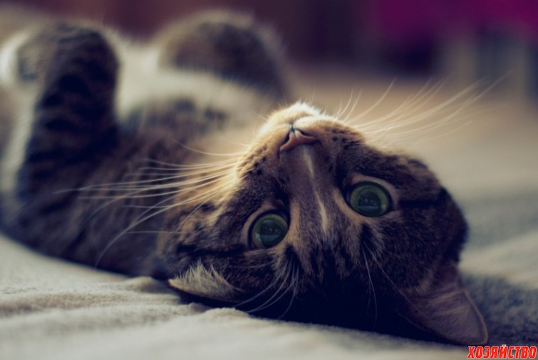 notified-the-owner-of-the-cat-burglar.jpg