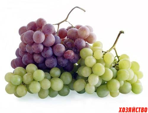 виноград.jpg