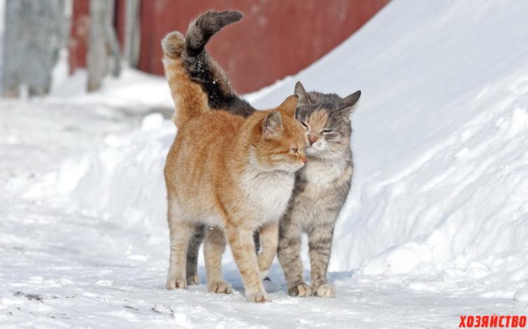 Весна – пора любви животных и проблем их хозяев.jpg