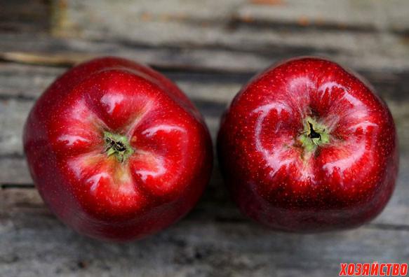 снятся-красные-яблоки.jpg