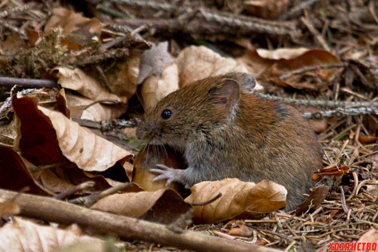 мышь.jpg