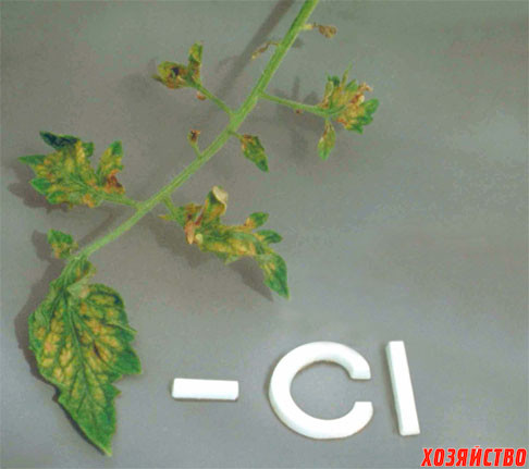 Chloride-deficiency.jpg
