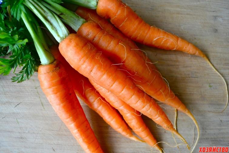 Морковь. морковная муха.jpg