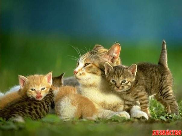 Как мама Мурка воспитывала своих котят.jpg
