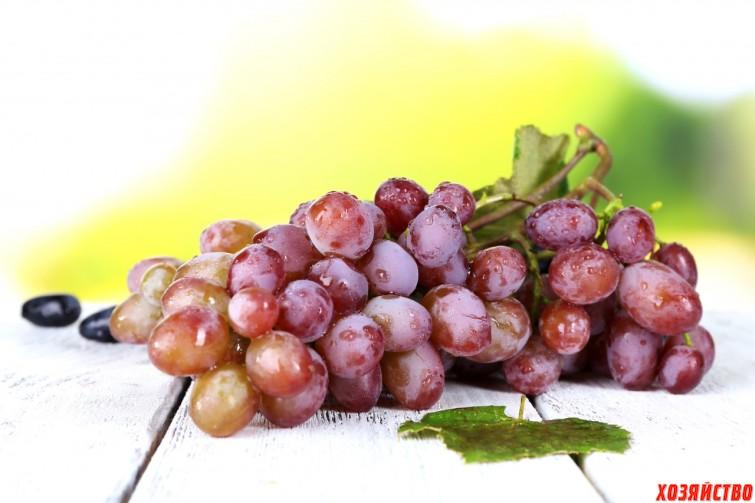 Виноград вырос из косточки – что с ним делать01.jpg