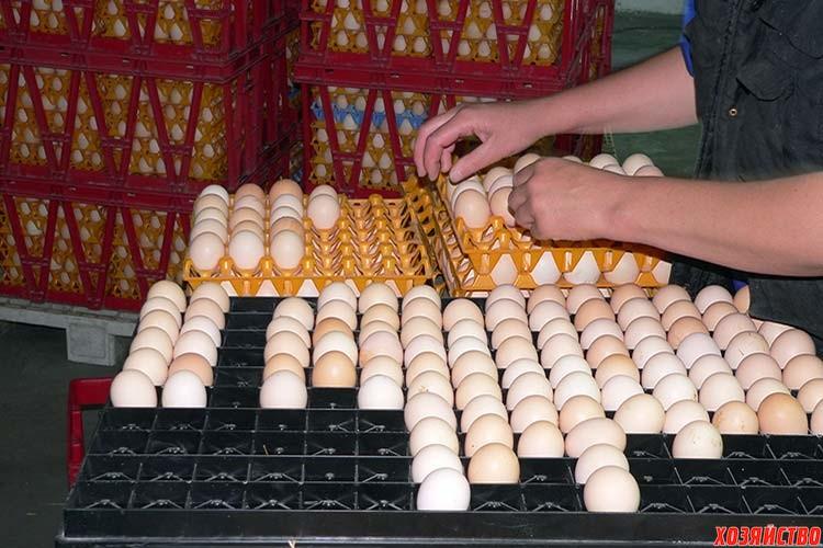 Совместная инкубация яиц птиц разных видов.jpg