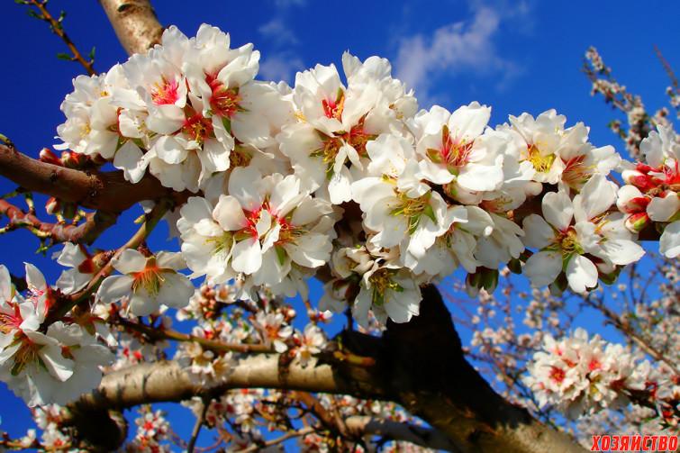 день плодовых деревьев.jpg