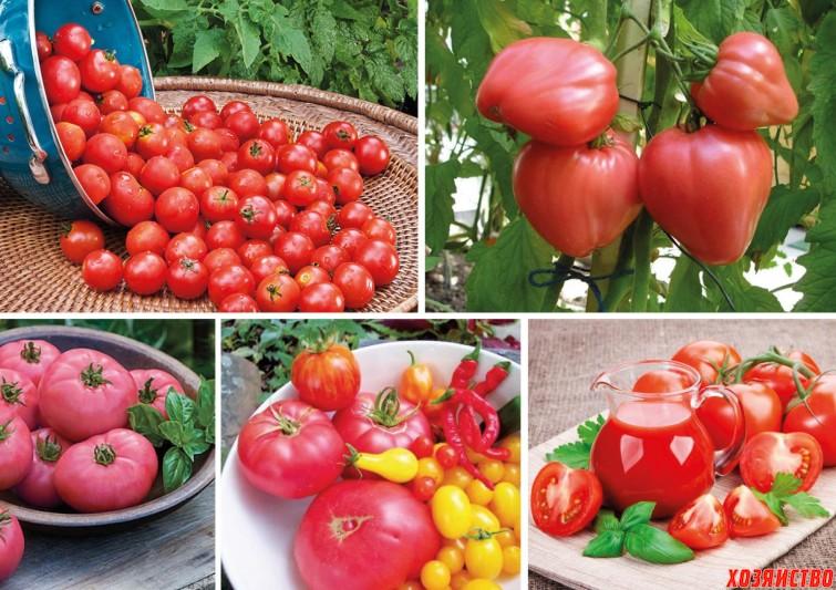 сладкие помидоры.jpg