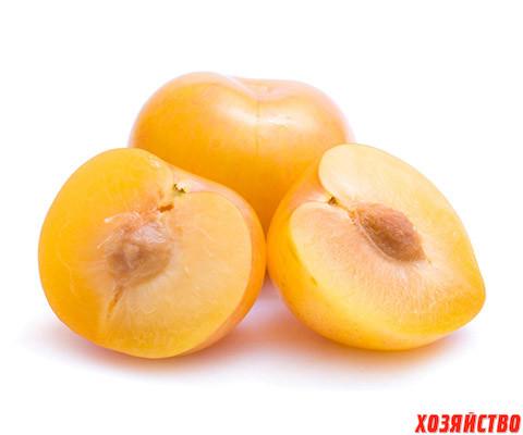 Plod-alichi.jpg