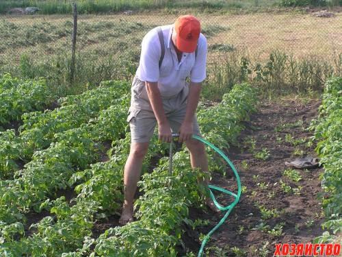 Картошку полейте... только немножко.jpg