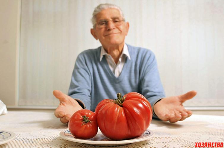 помидоры-гиганты.jpg