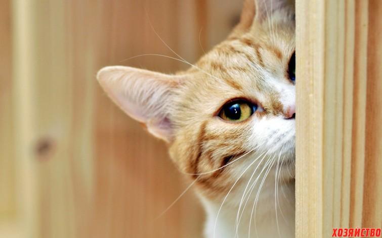 Как из-за гармошки кот воровать перестал01.jpg