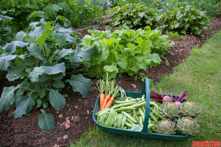 vegetable-gardening-for-beginners.jpg