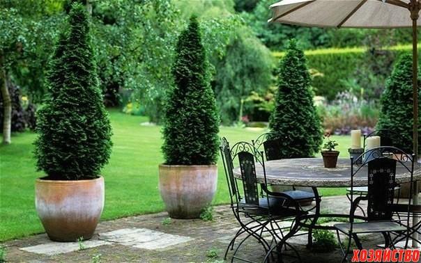 Какие хвойные растения можно посадить на даче.jpg