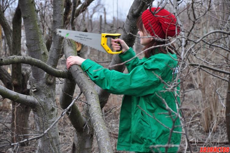 обрезка деревьев.jpg