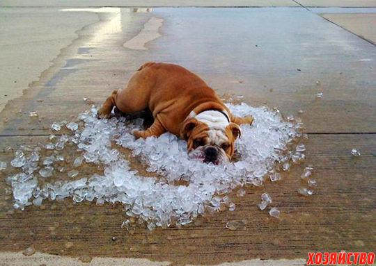 Летняя жара и домашние животные