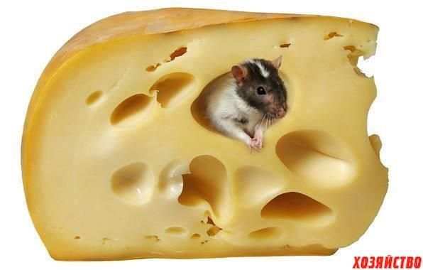 Крыса и сыр.jpg