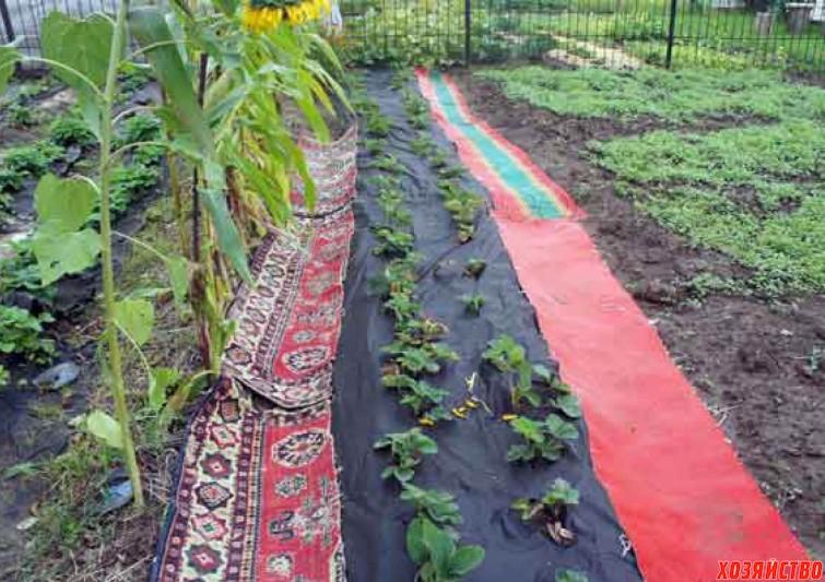 Тропинки на огороде своими руками