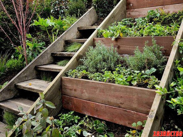 Идея для сада - плобольше пряных трав.jpg
